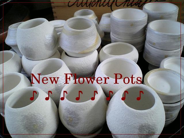 New_pot_2